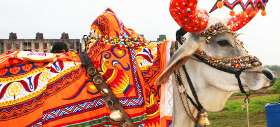 maharashtra and festival A large number of fairs and festivals are celebrated in maharashtra every year know about the festivals & fairs of maharashtra, india.