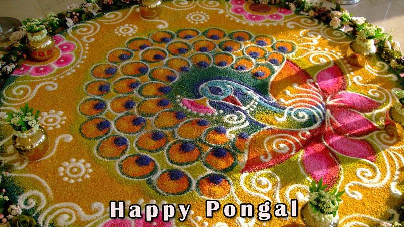 Pongal greetings m4hsunfo