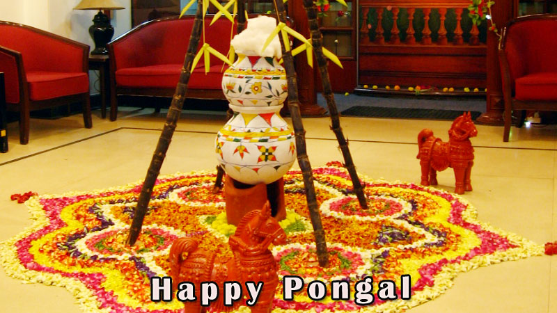 Pongal greetings recently added greetings m4hsunfo Image collections