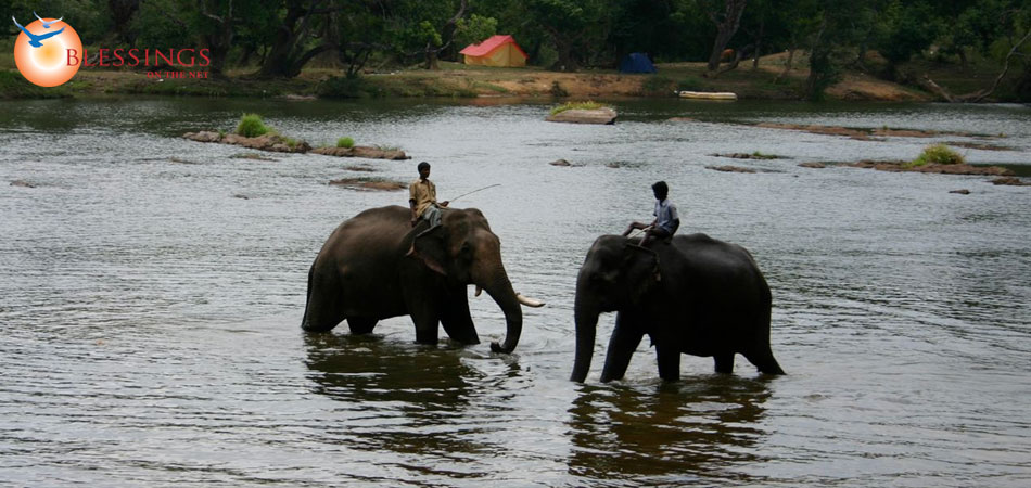 Tour Mysore Wayanad 3 Night 4 Day Package from Banglore