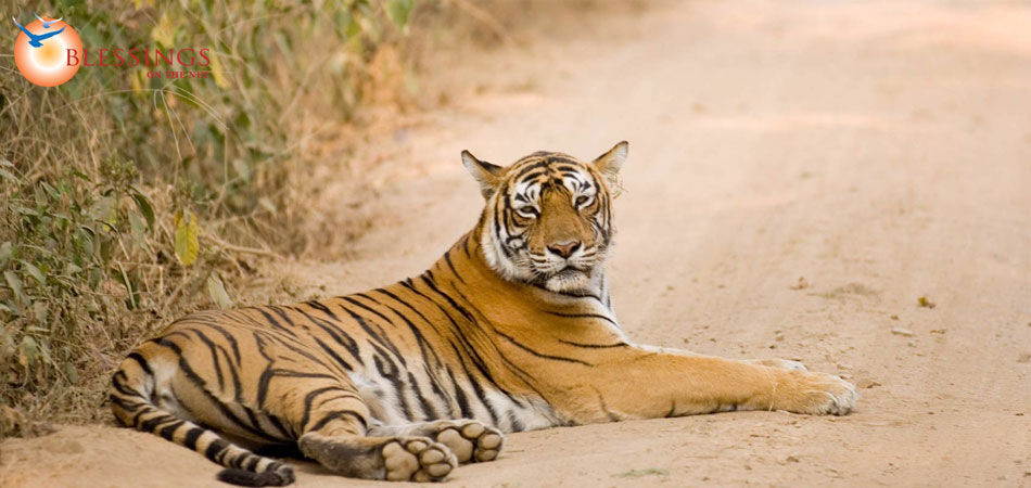 Wildlife Tour Kanha