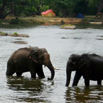 Tour Coorg