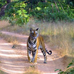 Wildlife Ranthambore Bharatpur from Jaipur
