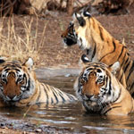 Honeymoon Tour Corbett Nainital 4 Night 5 Days from Delhi