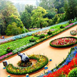 Tour Bangalore Ooty Kodaikanal 4 Nights  5 Days