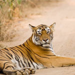Wildlife  Bandhavgarh from Nagpur Jabalpur