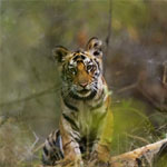 Pench Tadoba Wildlife